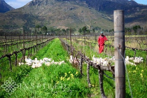 Avondale Eco Wine Safari